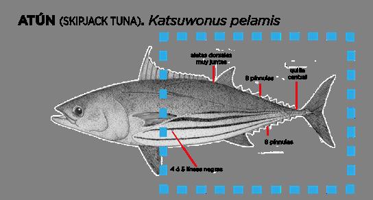 Bodegón de atún