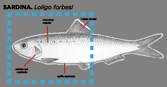 Bodegón de sardinas